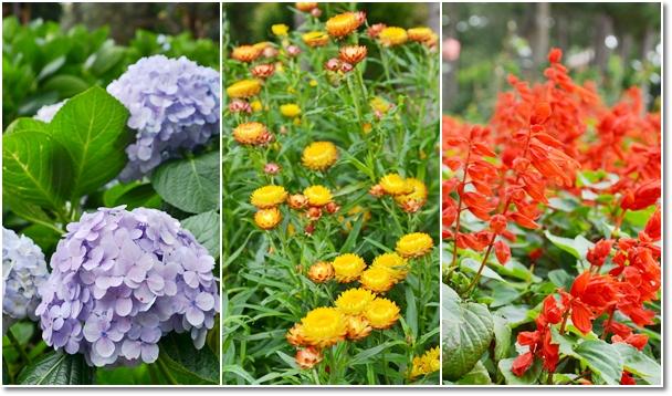 Floral Garden @ Truc Lam Monastery