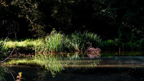 ochtendreflectie by eosfoto