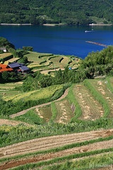 Urigasaka Rice Terraces