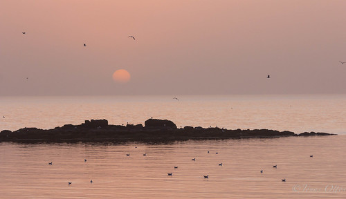 "ocean sunset birds landscape spring view akranes faxaflói krókalón fuglar dustcloud sólsetur natureplus canon60d ""flickraward sumar2012 maí2012 volcanincash"