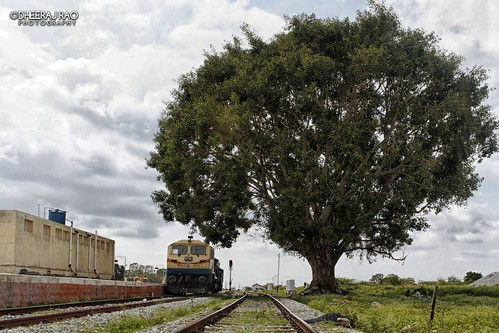 railroad tree train photography gm railway locomotive emd wdg4