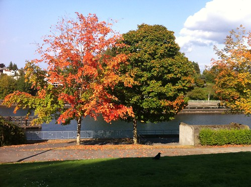 Fall Colors at Chittenden Locks