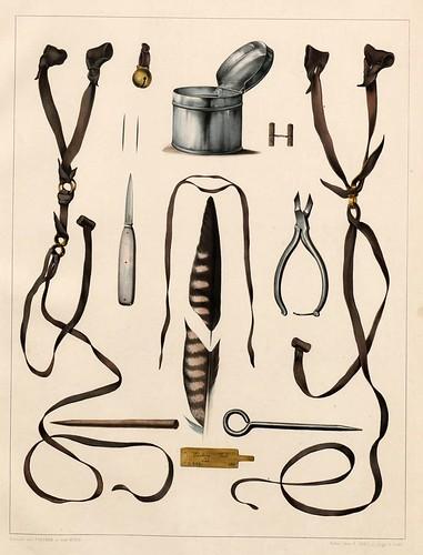 005-complemtnetos de cetreria2- Traité de fauconnerie..1853- Hermann Schlegel- Universität Düsseldorf