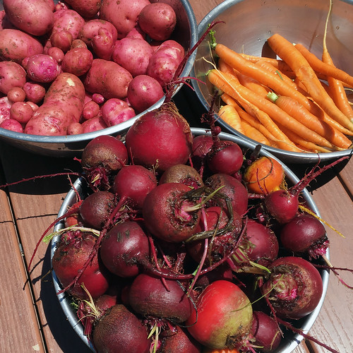 fresh from the garden: beets, carrots, potatoes