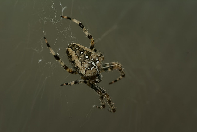 Le test de l'araignée - The spider test