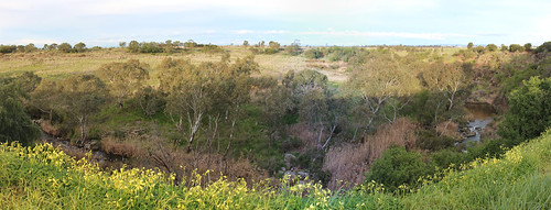 Panorama of Merri Creek and Merri Gorge, Campbellfield