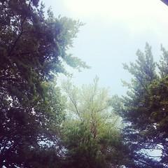 A little overcast