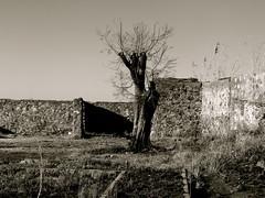 Ruins on Langeman's Kop