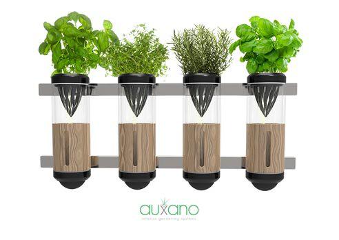 Компактное гидропонное устройство Auxano отлично вписывается в тесные квартиры