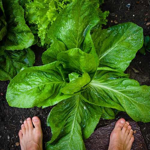 1206 - garden-fresh harvest