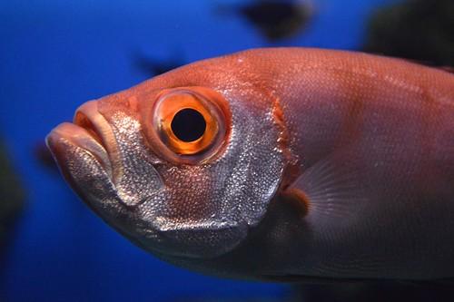 2012夏日大作戰 - 鹿児島 - かごしま水族館 (16)