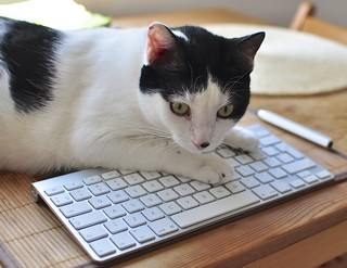 Pairing keyboard with... kitty!
