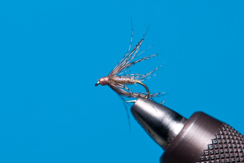 Soft Hackle 7