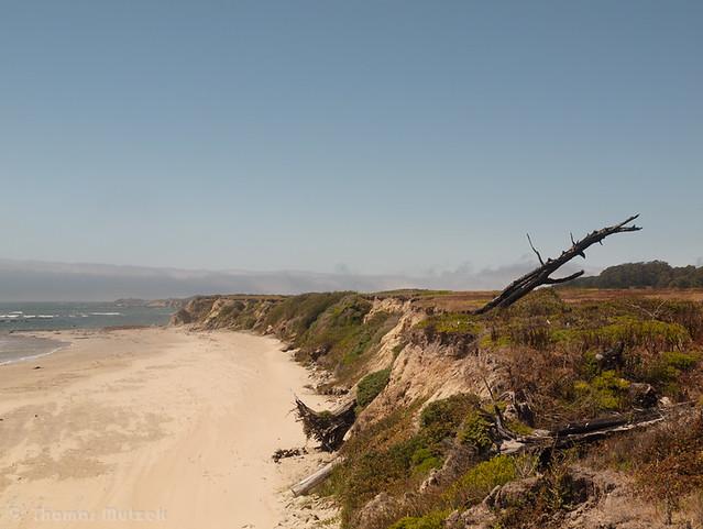 Atkinson Bluff and Coastal Terrace Prairie, Año Nuevo State Park, San Mateo
