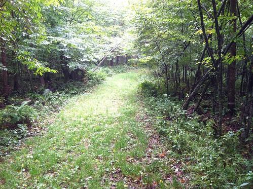 A bike path?