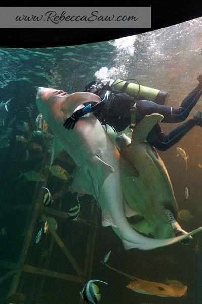 Singora Tram Tour - songkhla aquarium thailand-010