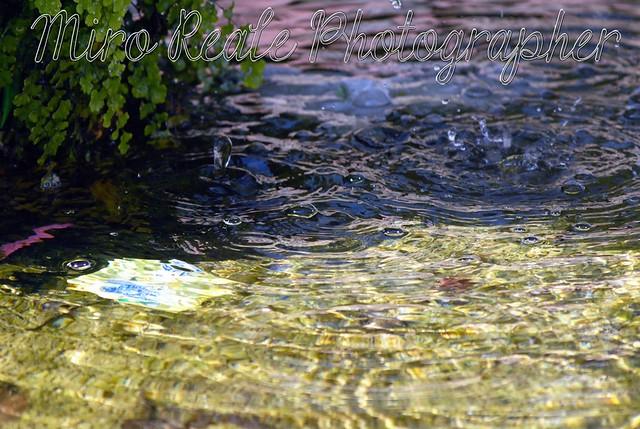 L'Acqua  (8)