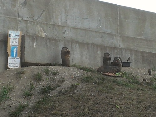 Family of Groundhogs