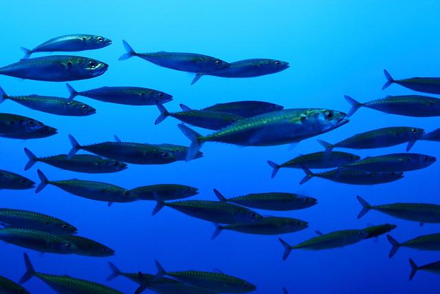 Fish school flickr photo sharing for Fish is fish