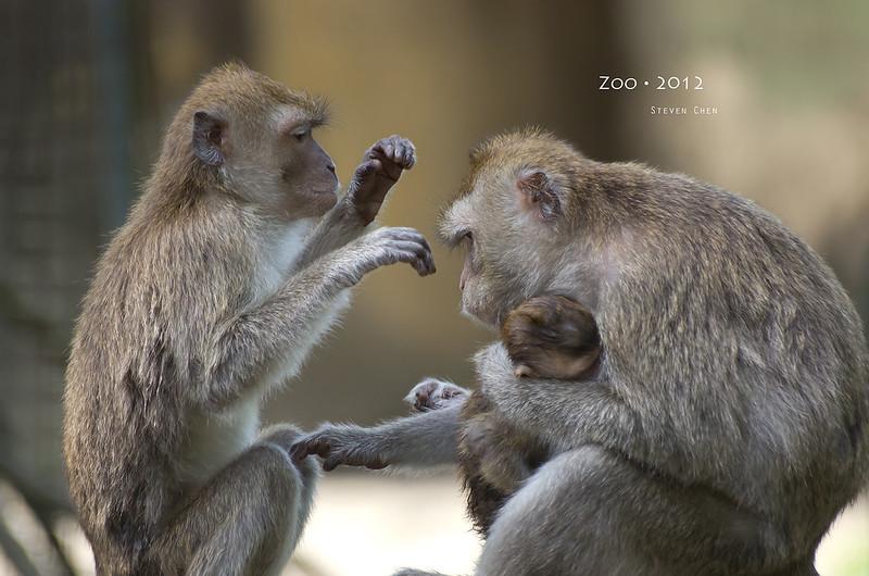 Zoo 2012 最後一眼夜行館
