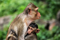 Monkeys Top Safari