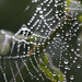Dew Drops on Spider Webs ©Quasimondo