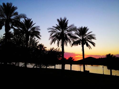 trees sunset arizona lake water community desert dusk az palm estrella goodyear subdivision maricopacounty goodyeararizona