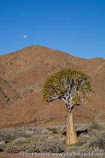 Richtersveld National Park - South Africa | by scottnramsay