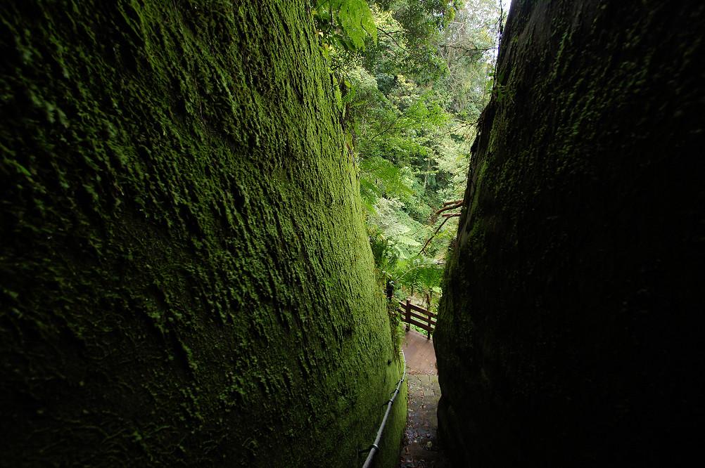 猴洞步道-33