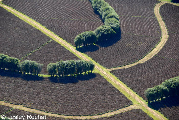 copyright-Lesley-Rochat Patterns on Earth