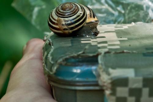 Resting Snail