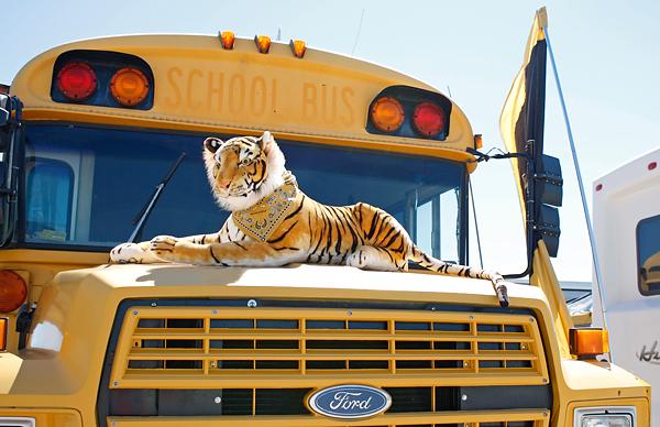 School Bus Fan : Photo gallery fans prepare for missouri s inaugural sec