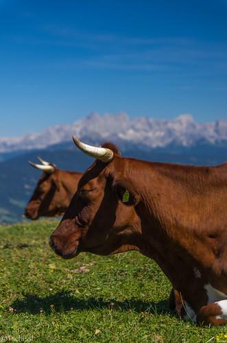 salzburg austria österreich sommer urlaub location berge landschaft