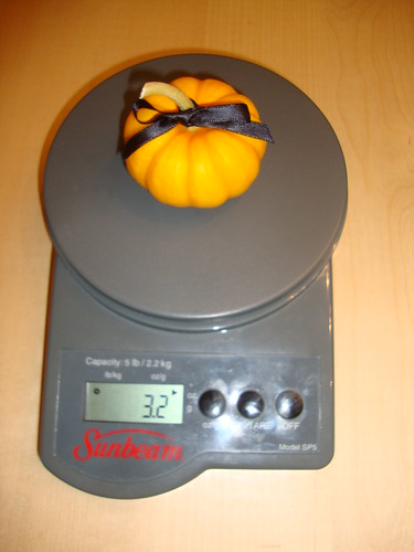Pumpkin C harvested on 9/9/12