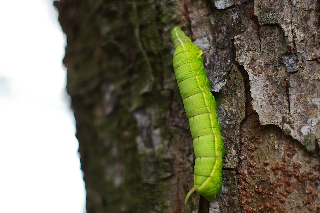 請問這隻是什麼蟲...