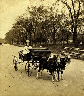 1870s fun in a Goat Carriage in Central Park, New York