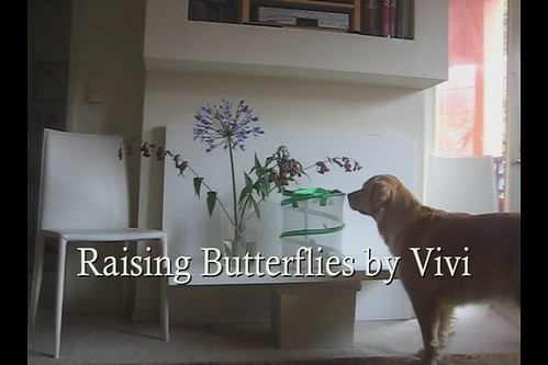 Raising Butterflies