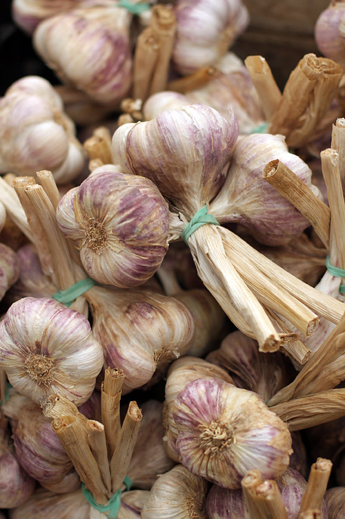 garlic at Agen market