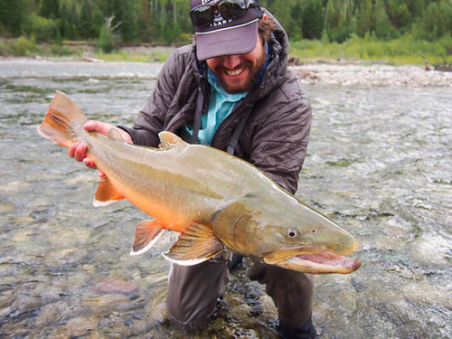 Bull Trout by Nathan Leavitt