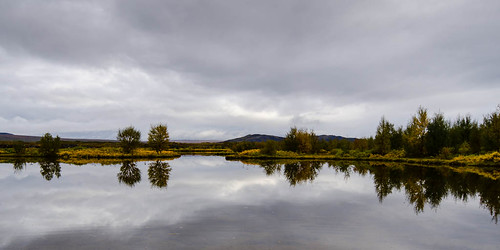autumn reflection trees þingvallavatn þingvellir water sigma1020 nikond7000 iceland 2012