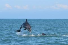 Dolphin Survey Trip 29th Aug 2016