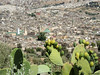 Prickly view on Fez