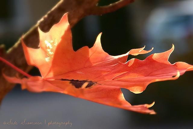 Autumn beauty / La Belleza del otoño (III)
