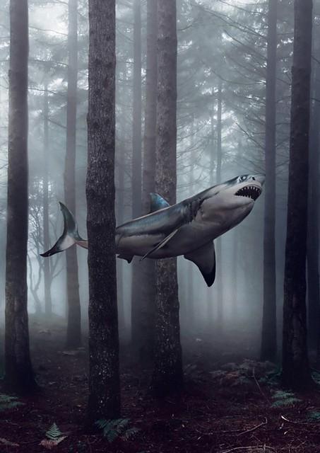 Shark Week 2012