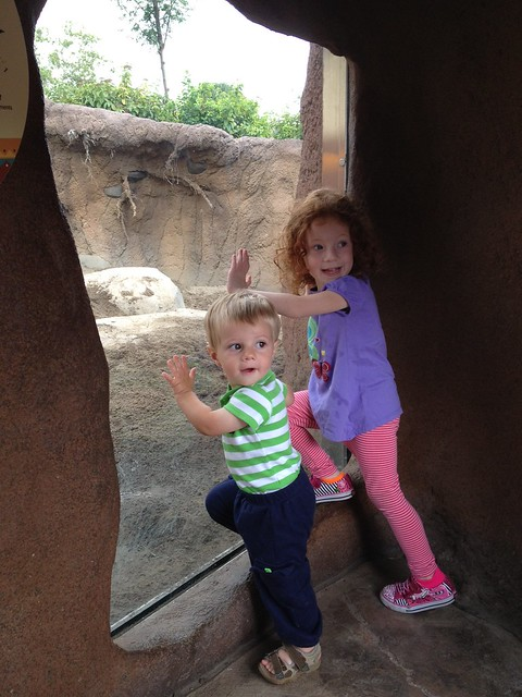 Animal watching at the Cleve Zoo! @clemetzoo #zoo #happyincle