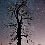 Milky Way behind a burnt tree. Cuyamaca Rancho State Park.