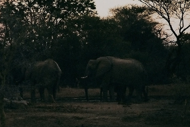 elephants at our waterhole
