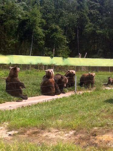 WPIR - dancing bears