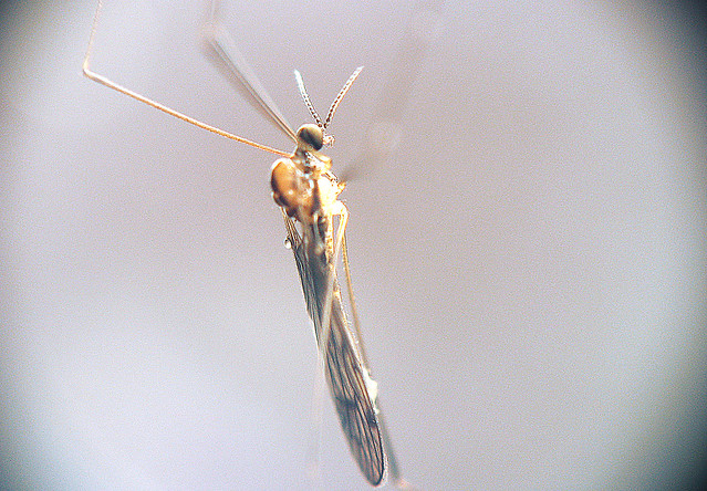 Somebug