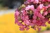 Photo:Flowers / 花(はな) By TANAKA Juuyoh (田中十洋)